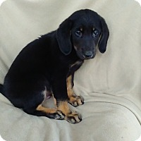 Adopt A Pet :: Spencer in CT - Manchester, CT