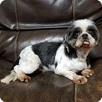 Adopt A Pet :: Margo Miller - Urbana, OH