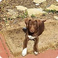 Adopt A Pet :: Hershey - Broken Arrow, OK