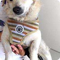 Adopt A Pet :: Juno - Monrovia, CA