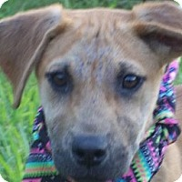 Adopt A Pet :: BOWS/Special Summer Pricing - Glastonbury, CT