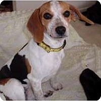 Adopt A Pet :: Lucky - Brewster, NY