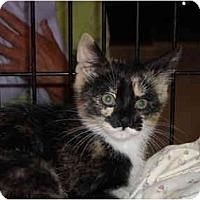 Adopt A Pet :: Jewel - Riverside, RI