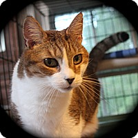Adopt A Pet :: Rebecca - Middletown, CT