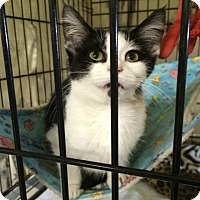 Adopt A Pet :: Cutie Reba - Byron Center, MI