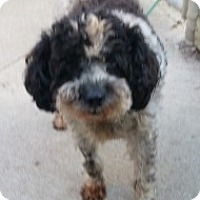 Adopt A Pet :: Chubs - Oberlin, OH