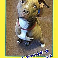 Adopt A Pet :: Niles - Staunton, VA