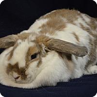 Adopt A Pet :: Caramel - Evansville, IN