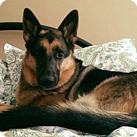 Adopt A Pet :: Bailey - Greeneville, TN