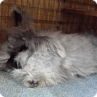 Adopt A Pet :: English - Williston, FL