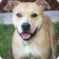 Adopt A Pet :: Blondie - Tallahassee, FL
