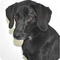 Adopt A Pet :: Bosco - Port Washington, NY