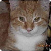 Adopt A Pet :: Elton - Riverside, RI