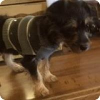 Adopt A Pet :: MOLLY - Riverside, CA