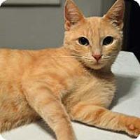 Adopt A Pet :: Julie - Merrifield, VA