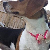 Adopt A Pet :: Jill aka Jilly Bean - Russellville, KY