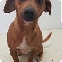Adopt A Pet :: Winnie - Pompton Lakes, NJ