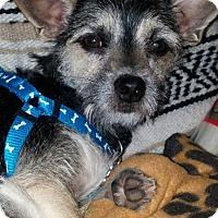 Adopt A Pet :: Luna - Rocky Mount, NC