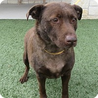 Adopt A Pet :: Jack - North Richland Hills, TX