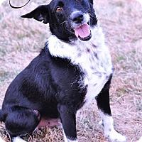 Adopt A Pet :: SARGE - Fort Worth, TX