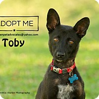 Adopt A Pet :: Toby - Pearland, TX