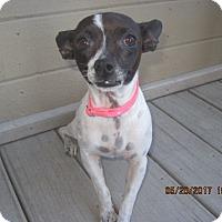 Adopt A Pet :: DAISY - La Mesa, CA