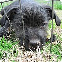 Adopt A Pet :: China - Albany, NY