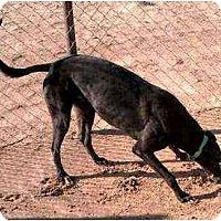Adopt A Pet :: Hercules (Chasmos Hercules) - Chagrin Falls, OH