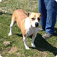 Adopt A Pet :: #096-14  ADOPTED! - Zanesville, OH