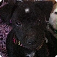 Adopt A Pet :: Spot - Phoenix, AZ
