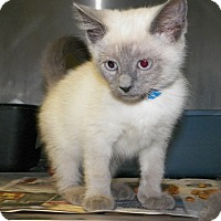 Adopt A Pet :: Johnathon - Dover, OH