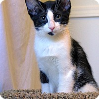 Adopt A Pet :: Luke - Victor, NY