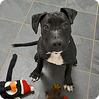 Adopt A Pet :: Jonah - Reisterstown, MD