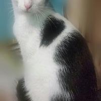 Adopt A Pet :: SIMON II - Ocala, FL