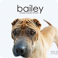 Adopt A Pet :: Bailey - Mira Loma, CA