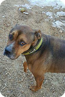 Beagle Mix Dog for adoption in Gainesville, Georgia - bruno