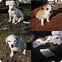 Adopt A Pet :: The Chewable Litter - Jacksonville, FL