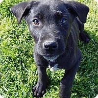 Adopt A Pet :: Benjamin - Terrell, TX