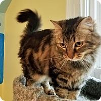 Adopt A Pet :: Amore - Bedford, VA
