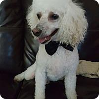 Adopt A Pet :: Andy - Overland Park, KS
