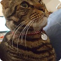 Adopt A Pet :: Ziggy - Alexandria, VA