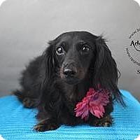 Adopt A Pet :: Snuggles Snuggy Bear - Shawnee Mission, KS