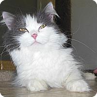 Adopt A Pet :: Jillian - Phoenix, AZ