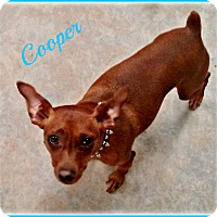 Adopt A Pet :: Cooper - Sacramento, CA