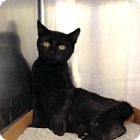 Adopt A Pet :: Shyloh - East Brunswick, NJ