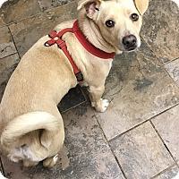 Adopt A Pet :: Captain  adoption fee $100 - Redding, CA