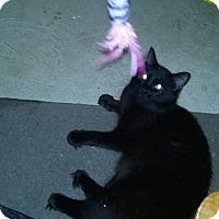 Adopt A Pet :: Coco - Covington, PA