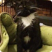 Adopt A Pet :: Figgy - New York, NY