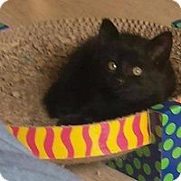 Adopt A Pet :: Orzo - Ocala, FL