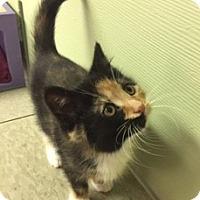 Adopt A Pet :: Gaby - Medina, OH